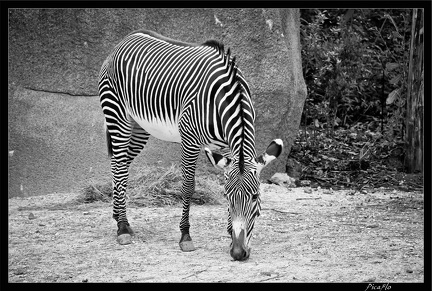 Zoo de Vincennes 015
