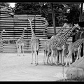 Zoo de Vincennes 033
