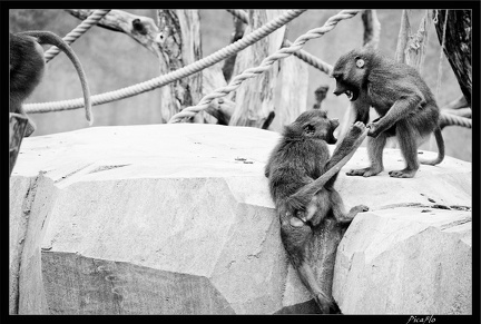 Zoo de Vincennes 039