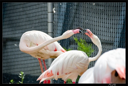 Zoo de Vincennes 058