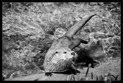 Zoo de Vincennes 066