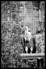 Zoo de Vincennes 074